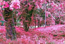 God Must Love Pink Too!
