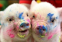 This little piggy stayed home / by Karen Rinehart
