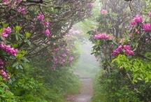 Floral~My Secret Place