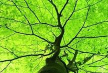 Green: Tree Tree / by daiyuk Lam