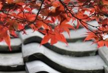 Japanese plantlife / flowers, leaves, roots