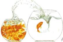 Life: gold fish / by daiyuk Lam