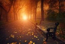 Autumn / by Jen DeRusha