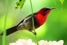 BIRDS are Beautiful . . . . . / by Sarah L. Vargas