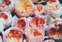 Flowers  / by Alejandra Ramirez