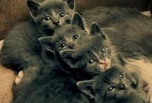Pets / by Jen DeRusha