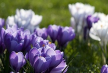 Springtime / by Jen DeRusha