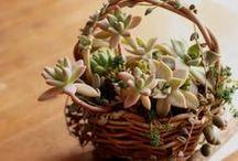 Microgarden Succulents fairy gardens / microgarden Succulent plant cactus idea