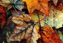autumn / by Susana Reeders