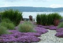 Lake House Landscaping / Landscaping - Maintenance Free; gathering areas; boat toy storage / by Kari Clevinger