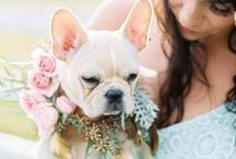 Wedding Pets / The ultimate personal touch to your big day: including your fur baby. From ring bearers to just sitting and looking cute, here are our favorite dapper wedding pets.