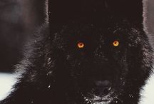 The First - wolfs