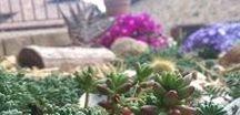 spring / colori in natura