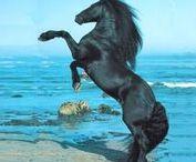 fríz lovak / friz lovakrol képek ha tetszik kövess be!nyugottan küldjetek kepeket privátba!