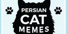 Persian Cat Memes