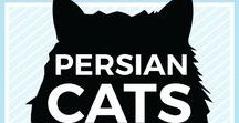 Persian Cats + Kittens