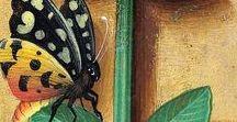 Butterflies in Illuminated Manuscripts / Arte