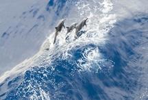 The sea / by Olga Beloysova