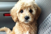 AWWWWWWW!!! / Things SO CUTE, you can't HELP but say 'AWWWWW' about!!!