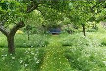 Garden Paths and Country Roads / I love to see where they end up / by Michaele Thunen