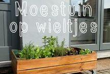 Peet's... Dakmoestuin # Rooftop garden / by Peet's... inspiratie