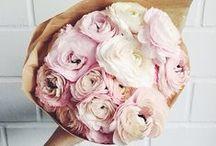 Bloom / flowers / by Taime Neeyaphan