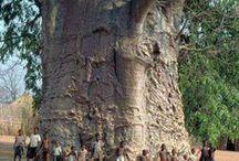 Csodálatos fák