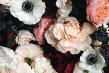 Belles plantes / Fleurs, plantes, jardins