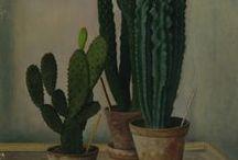 1.8 cactus