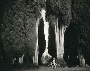 1.8 Cypress