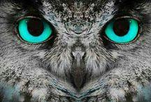    ~Owls~ / <3