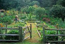 Garden / by Courtney Nicole