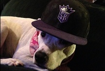 Kings Pets / See how Kings fans show off their animals. / by Sacramento Kings