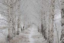 Winter Wonderland  ❄️❄️❄️❄️
