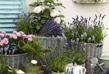 Garden in pot