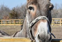 Keeping Donkeys / All about caring for donkeys