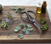 Aromatherapy Essential Oils / The best aromatherapy recipes, essential oils and ingredients to ease ailments.