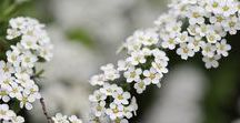 PLANTES SAUVAGES / Découvrez les vertus des plantes utilisées dans nos potions magiques Mybestea !