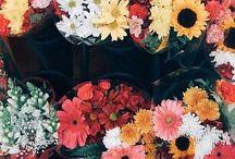 pop of colors / Colors, pretty pictures, aesthetics, paint your world