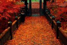 Fall/Halloween/Thanksgiving / by Nancy Gorton