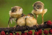 Birds / by Sam Murray