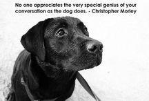 <3 DOGZ <3 / All things dog <3 / by P¥N€RG¥ ~ ^ƸӜƷ^ ~ ✯~ ☮~♥~♬~✯