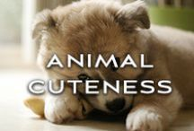 Animal Cuteness / by Kinky Liqueur