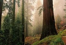 Wooded Wonderland / Forest Life and it's critters. / by Patty Dahl