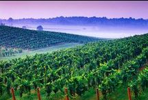 Wineries & Breweries / Appalachian vineyards and micro-breweries have become nationally recognized in the past few years! Come taste some of the best local varietals and brews in the region.