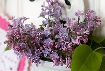 Little Lilac Cottage / by Patty Dahl