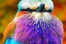 Vackra fåglar