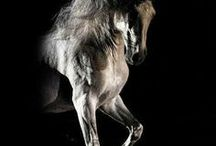 Horses / I think horses are the most beautiful creatures in the world! They are so perfect! I hope this photos will show you how great they are!