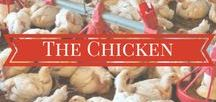 The Chicken / This board has information on broiler (chickens raised for meat) production. Topics include bird health, advances in poultry production, chick embryonic development, how chicken is processed and much more!