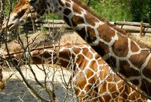 Animaux / #Animaux #Animals #Tiere